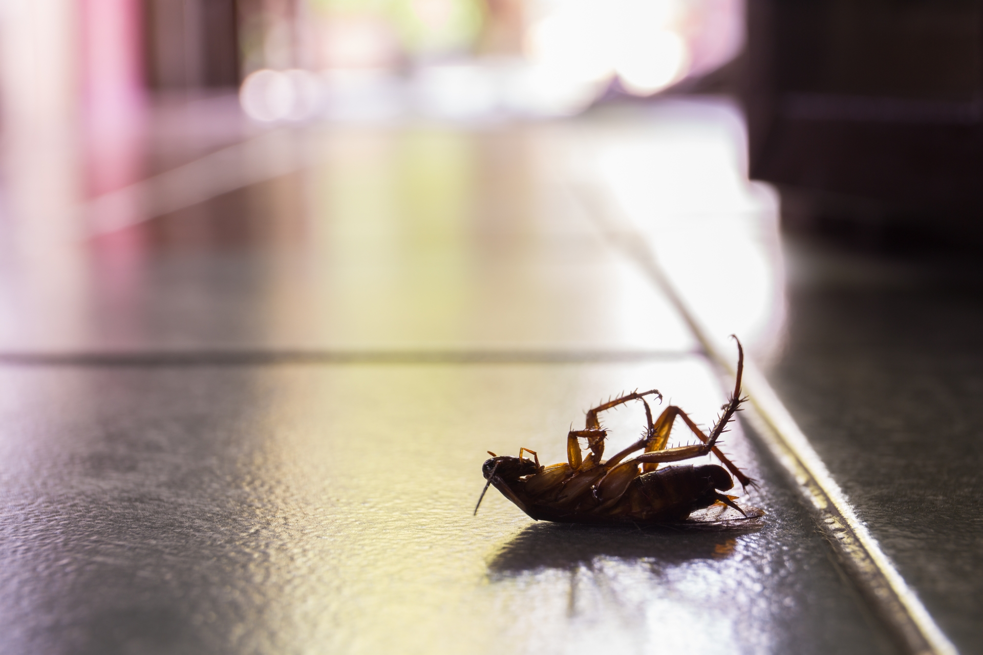 Cockroach Control, Pest Control in Ewell, Stoneleigh, KT17. Call Now 020 8166 9746