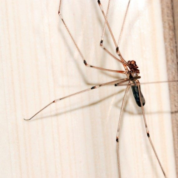 Spiders, Pest Control in Ewell, Stoneleigh, KT17. Call Now! 020 8166 9746